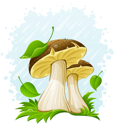 edible mushroom: mushrooms with green leaf in grass under the rain