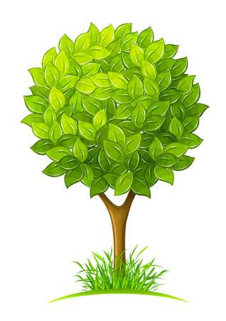 원예: 녹색 나무 흰색 배경에 고립 된 그림 나뭇잎 일러스트