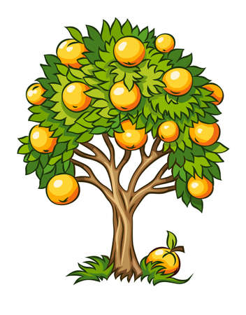 leafage: fruit tree illustration isolated on white background