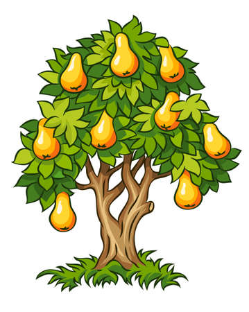 pear tree with ripe fruits illustration isolated on white background