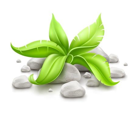 planta con hojas verdes en piedras aisladas sobre fondo blanco. EPS10 vector ilustración. Gradiente de malla utilizada. Los objetos transparentes utilizados para dibujar las sombras.