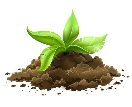 plante avec des feuilles vertes de plus en plus à partir du sol isolé sur fond blanc
