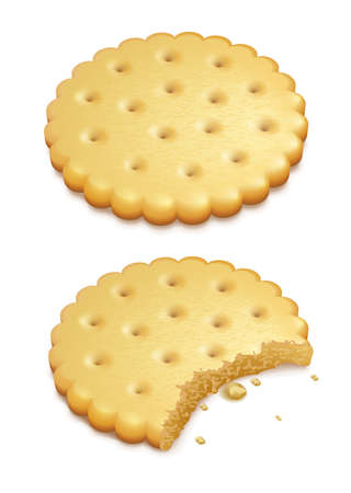 two crispy cookies isolated on white background   Vector