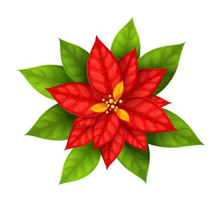 flor de pascua: Red Christmas Star flor poinsettia aislada en el fondo blanco - ilustraci�n vectorial de eps10