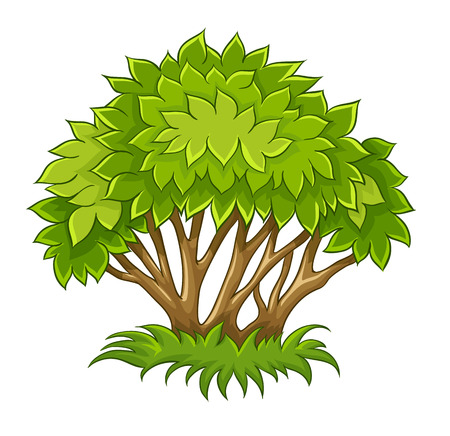 Bush with green leaf. Eps10 vector illustration. Isolated on white background