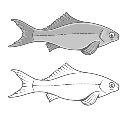 fish form: Silhouette of fish contour drawing. Eps8 vector illustration. Isolated on white background Illustration