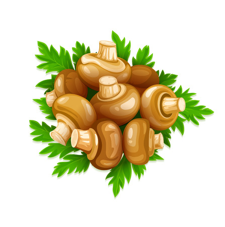 ready cooked: Mushrooms champignons with green parsley set of food vegetables. Eps10 vector illustration. Isolated on white background