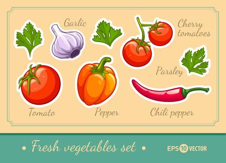 ajo: Conjunto de verduras orgánicas frescas cereza tomate pimienta de chile ajo y perejil. Ilustración vectorial Eps10. Aislado en el fondo blanco