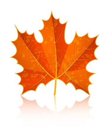 sycamore leaf: Autumn dry maple leaf. Eps10 vector illustration. Isolated on white background