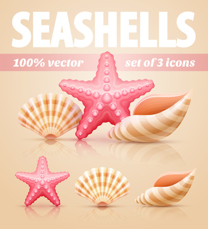 sea star: Set of summer sea shells and starfish icons. Eps10 vector illustration Illustration