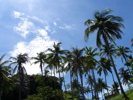Palms in the nice Thailand sky, Ko Taho Island