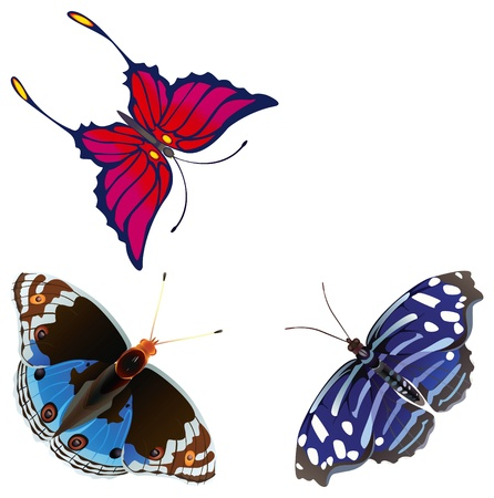 Abstract exotic butterfly Vector
