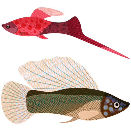 poecilia: sword-bearer and poecilia velifera Fishes
