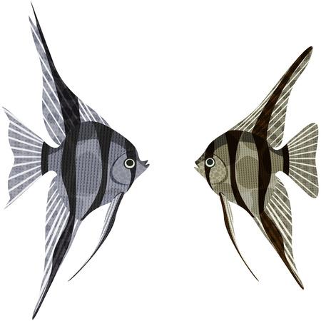 scalar: Exotic aquarium fish Amazon basin: altum and scalar, EPS10 - vector graphics.