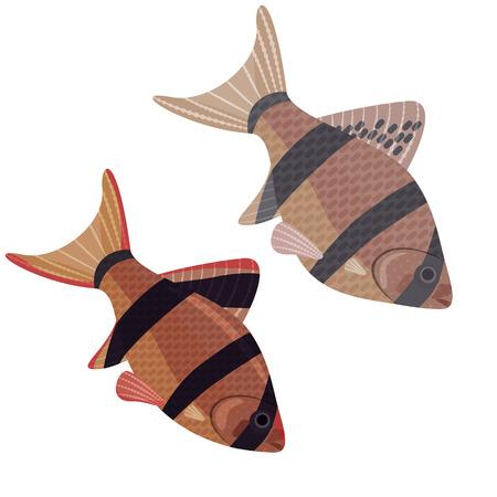 sumatra: Fishes aquarium exotic puntius tetrazona,10 - vector graphics.