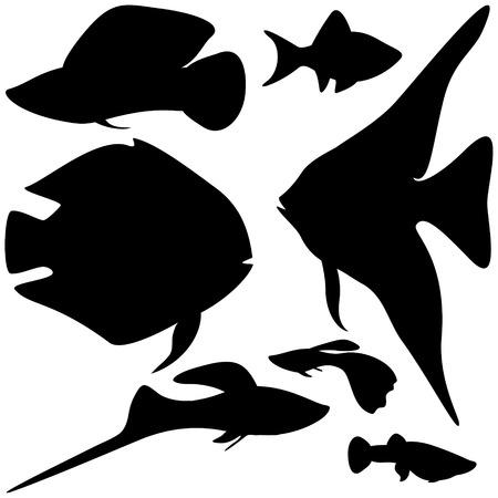 Collection circuits aquarium fishes, EPS8 - vector graphics. Vector