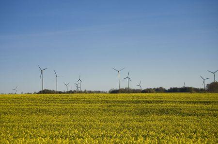 landscape yellow rape and blue sky photo