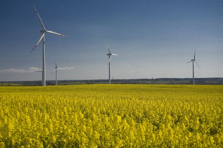 landscape yellow rape and blue sky Stock Photo