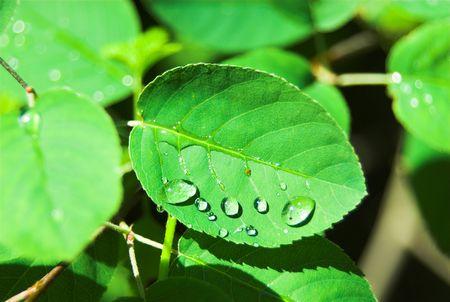 sumer rain drops on green plants photo