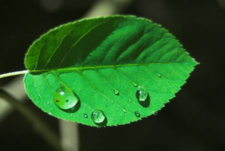 sumer rain drops on green plants Stock Photo