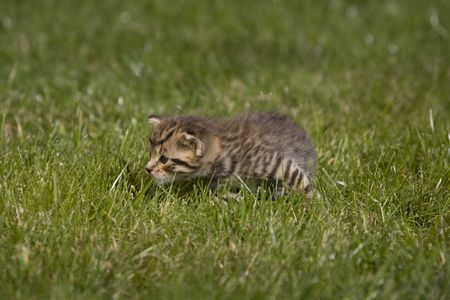 small young cat portrait on green grass photo