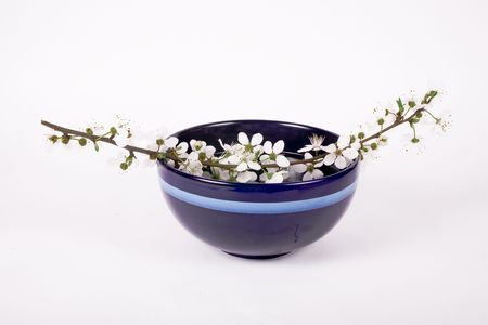 youthfulness: white apple flower on dark blue china bowl