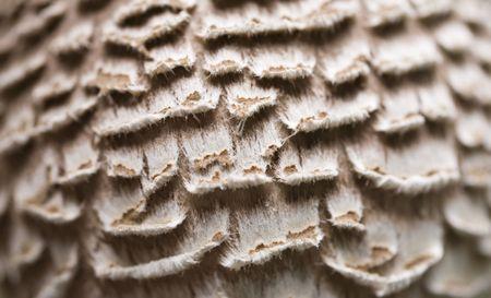 shaggy: fall hat shaggy parasol beige background