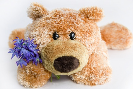 endearment: Soft toy the bear  with a flower on a white background