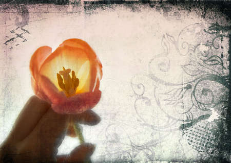 burnt edges: Grunge page with pink tulip in woman�s hand and burnt edges Stock Photo