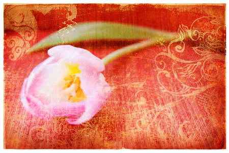 flower age: Pink tulip on orange grunge paper page background with damaged edges and rich texture