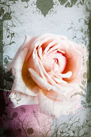 Pink and beige garden rose in full bloom in small pink vase on grunge background