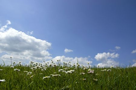 Daisies and Sky photo