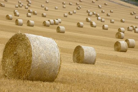 field of straw bales photo