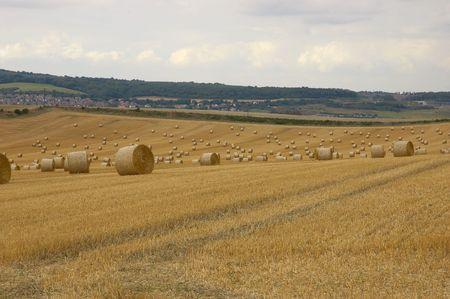 field of straw bales photo