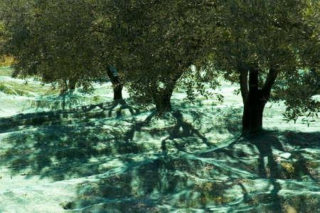 the green net