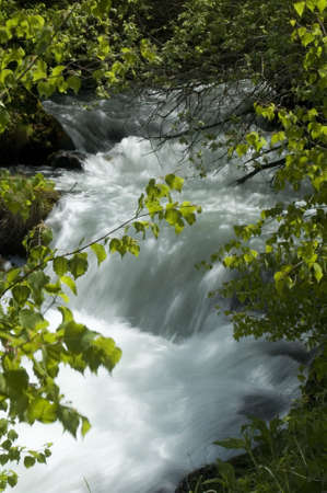 speedy waters