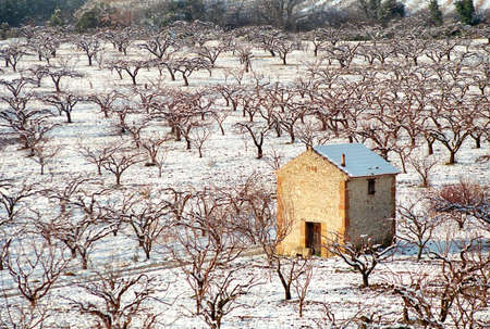 snow-covered cabin to the fruit tree middle