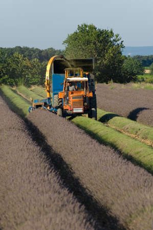 enclave: Harvest of lavandinses to the machine on the township of Grillon
