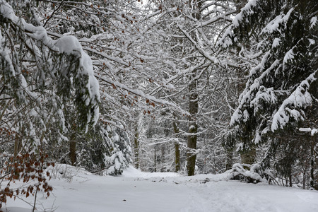 foliage in the snow