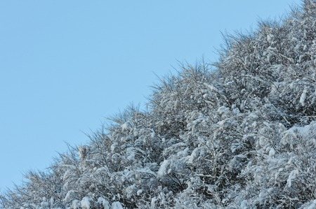 mid mid sky snowy forest