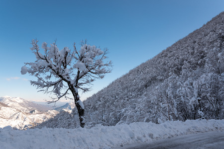 tree in the snow at the roadside