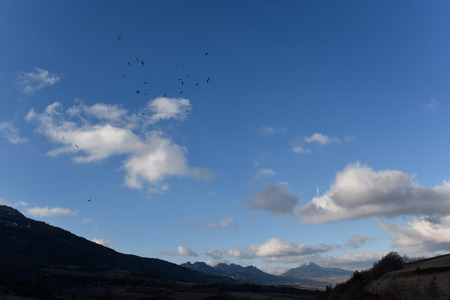 group of vultures in the sky