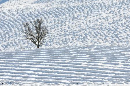 ligne: arbre solitaire au milieu d Stock Photo