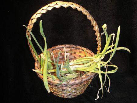 Onions sproutin Stock Photo