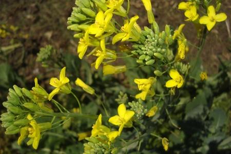 Yellow flower grouping