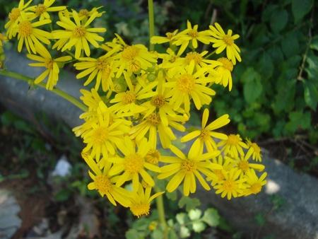 Full yellow