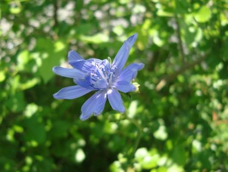 Blue Stock Photo - 13709815
