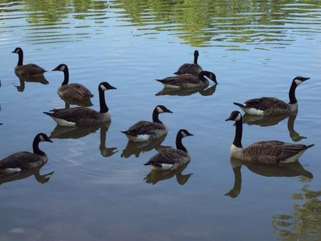 Ten Geese