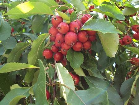Berry Bushel