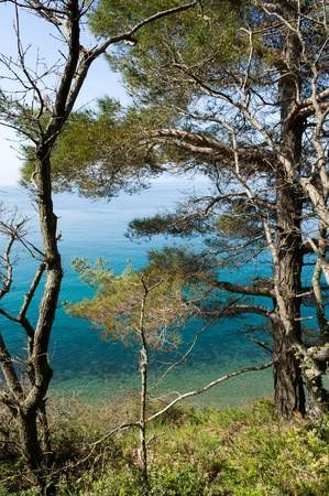 Trees over sea Stock Photo - 17293663